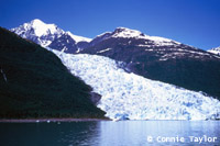 Glacier cruises in Kenai Fjords